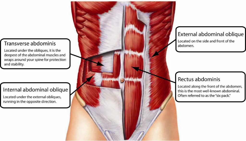 Abdominal-Muscles-